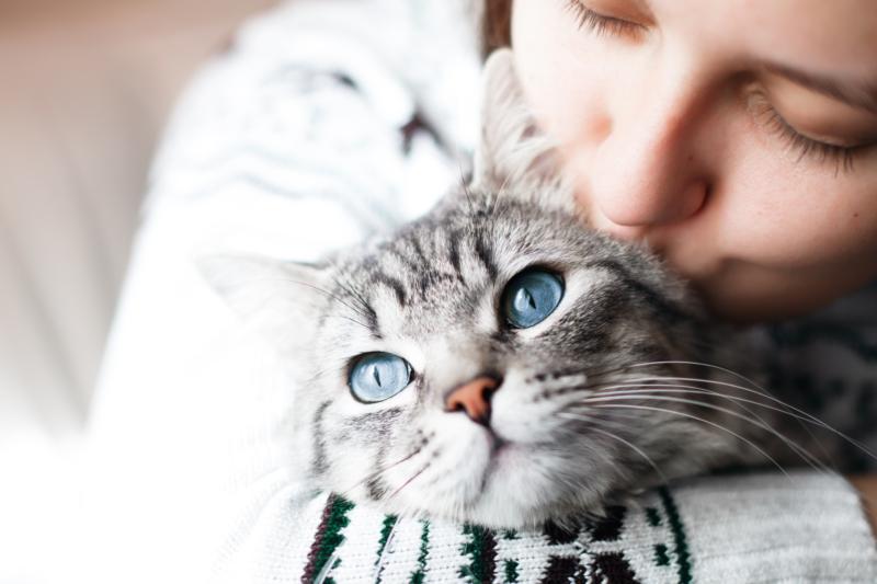 Så nöjda är hund- och kattägarna med sina försäkringsbolag